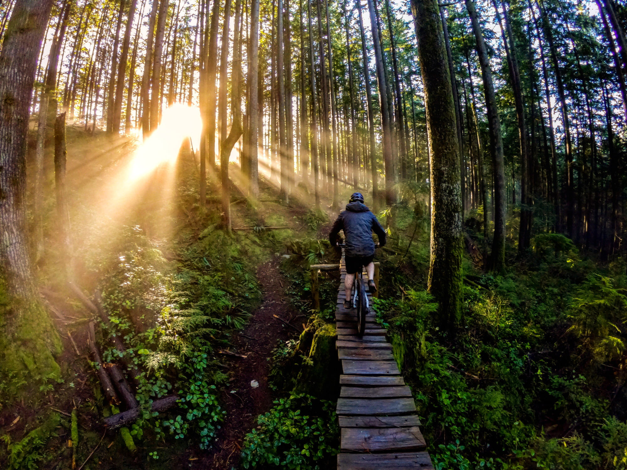 North Shore Mountain Biking Adventures – Freeride On Fromme And Shredding Seymour