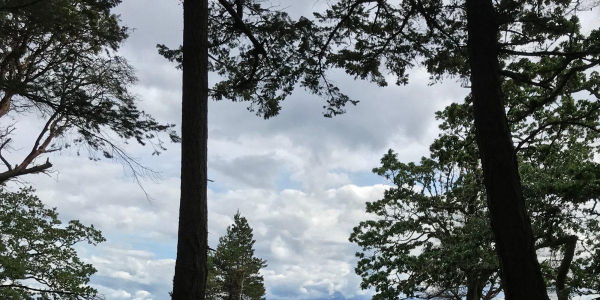 Hornby Woods Walk - WP Crop