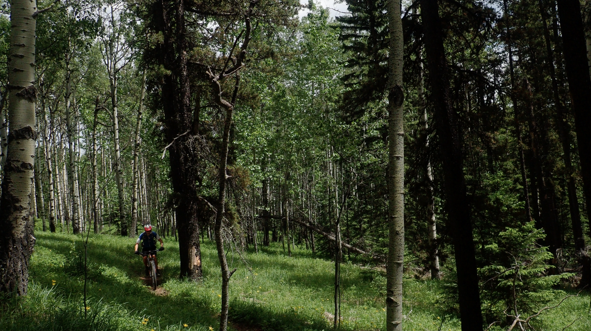 Mountain Biking In Forests In Bragg Creek, Alberta
