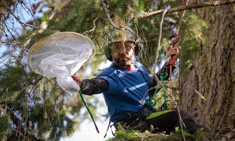 Matthew Beatty Working In Ancient Forest