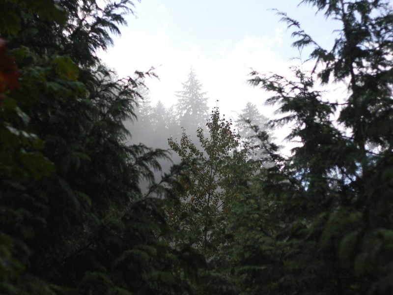 Canada's Ancient Forests And How To Protect Them