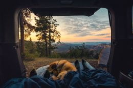 People And Dog Practicing Responsible Travel While Camping